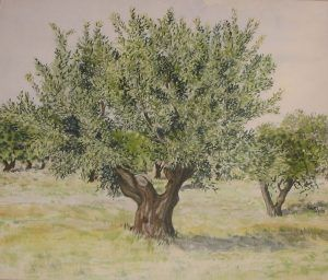 The olive tree in the forest world